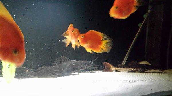 Quelques photos de mon grand aqua dans ma salle à manger ;-)