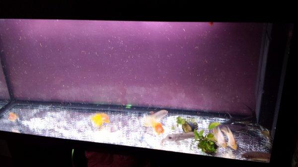 Quelques photos de mon nouvel aqua de 400 litres dans mon salon...