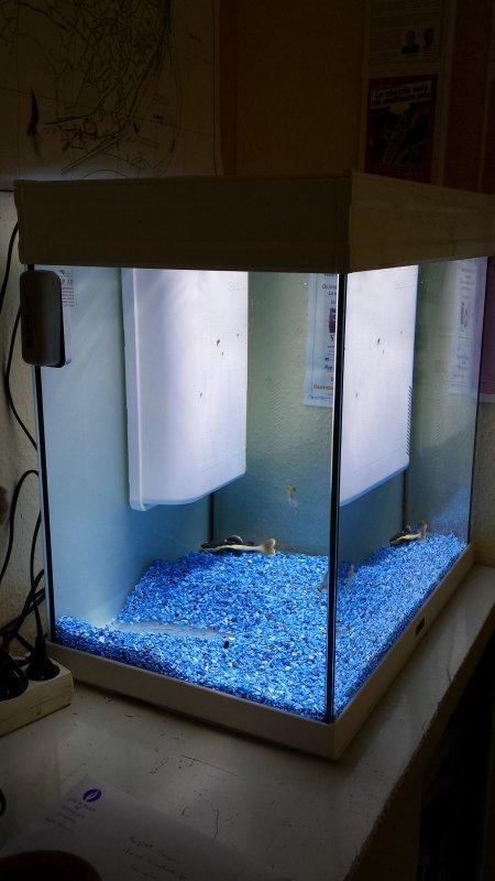 Les 2 petits aqua que j'ai mis à mon bureau avec un phractocéphalus, un spatula, un discus, un scalaire, 2 piranhas et d'autres... ;-)