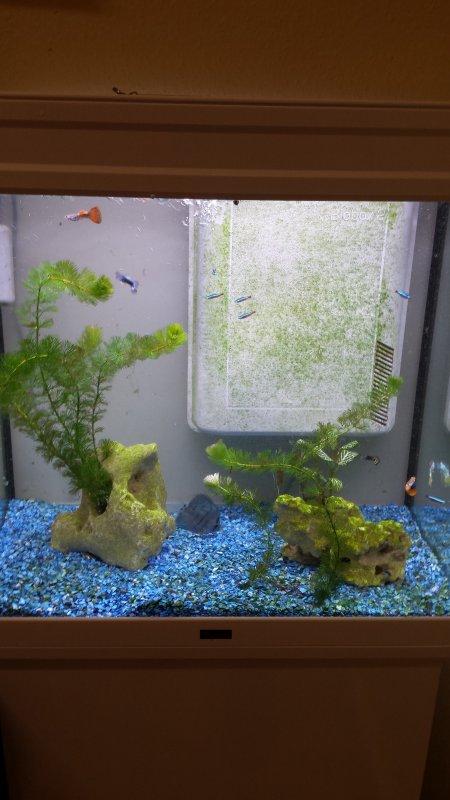 Aquarium de mon boulot avec ses 2 dernières décos ;-)