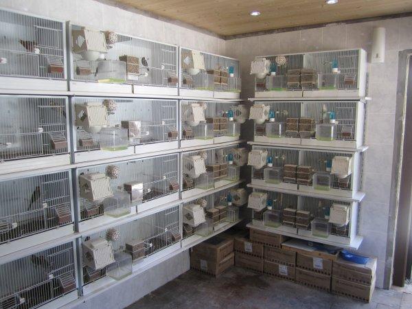 Suite 10 Construction de ma pièce d'élevage.