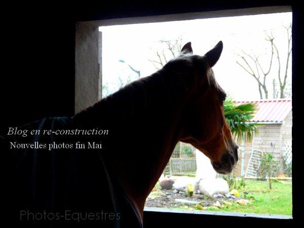 Photos-Equestres