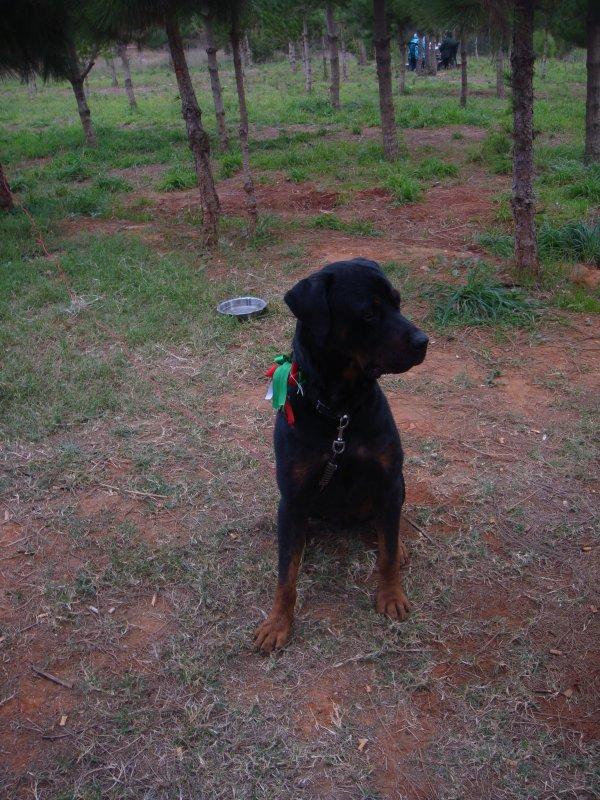 mon chien max ci mon meilleur ami je le kiffffffffffffff8-p
