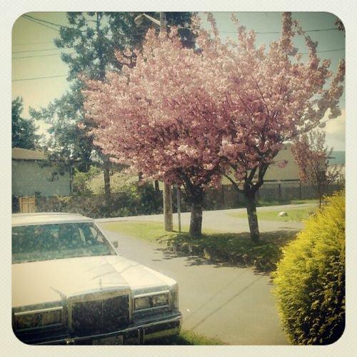 « Avril fait la fleur Mai en a l'honneur.  »
