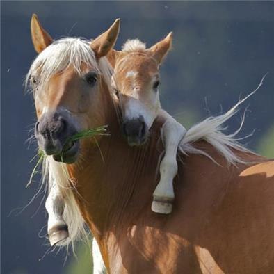 chevaux <33