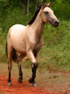 Cheval <33