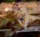 Photo de Prunelle-de-Saphir