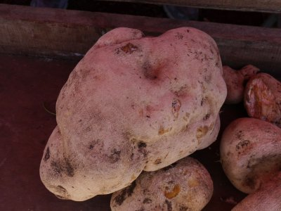 patate chouchou