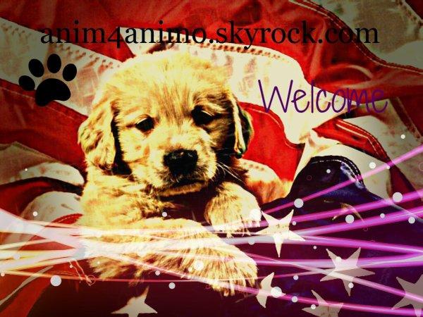 anim4animo.skyrock.com