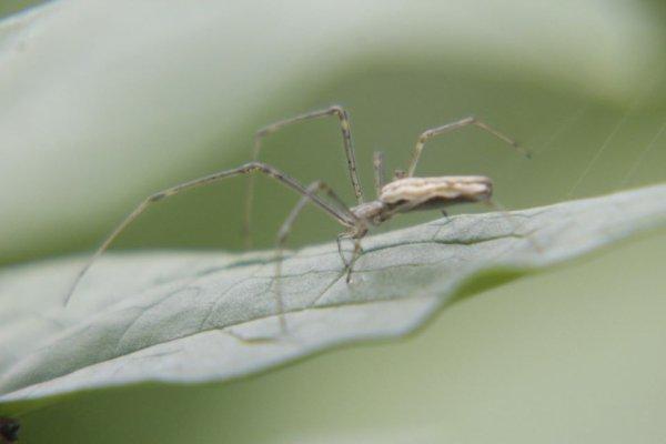 Les araignees de Belgique