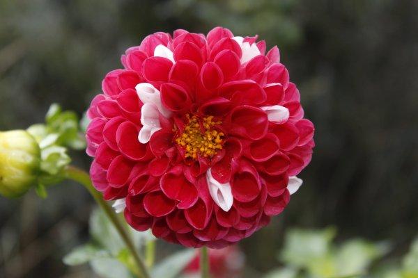 Les fleur en photos