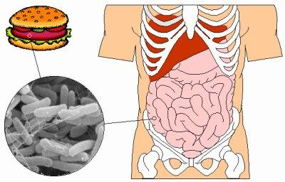 SALUD: Escherichia coli y sus cepas, by Camino Martinez M. (Información de Red)
