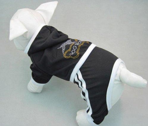 training dog sport