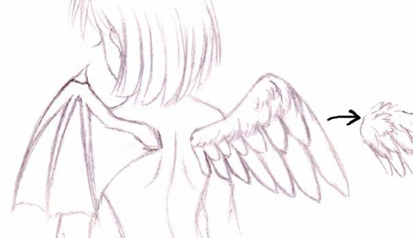 Comment on dessine des ailes ?