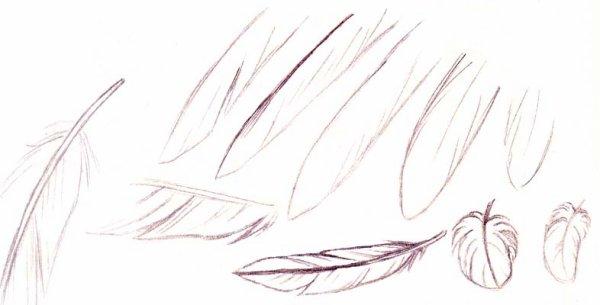 Comment on dessine des ailes ?
