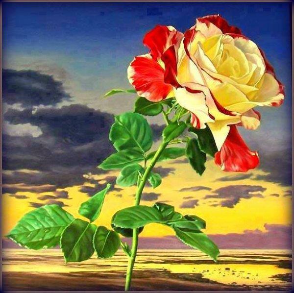Jolies roses.