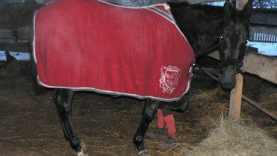 moka mon cheval