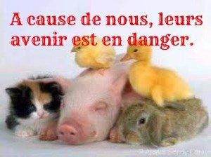 Quelque petit articles important pour les animaux :