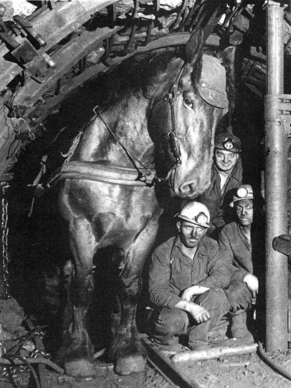 Les chevaux des mines