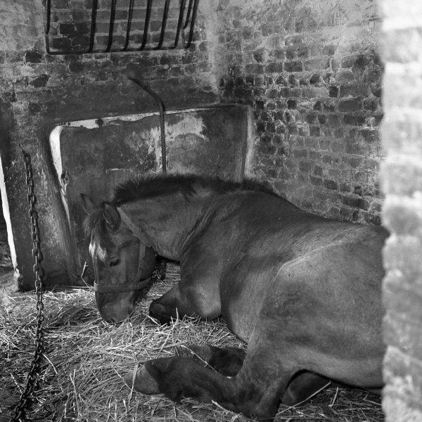 Le cheval du fond, poême de mon ami Henri Raimbaut de Marles.