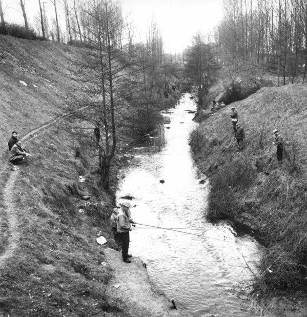 Bruay en Artois, pêche à la truite dans la rivière La Lawe.