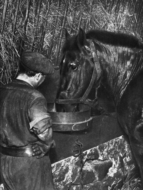 L'emploi du cheval au fond  1