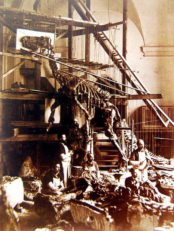 Des dinosaures au fond de la mine de Bernisart.