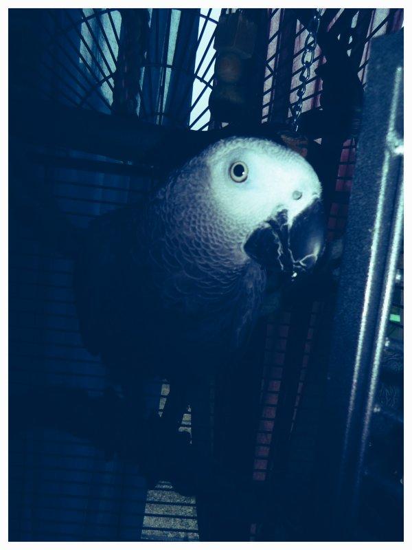 Mes 2 bébé :D Zelko & Cherry <3