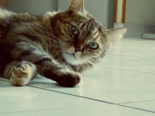 Mon chat il nique tout