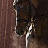 Dax-Cavalry