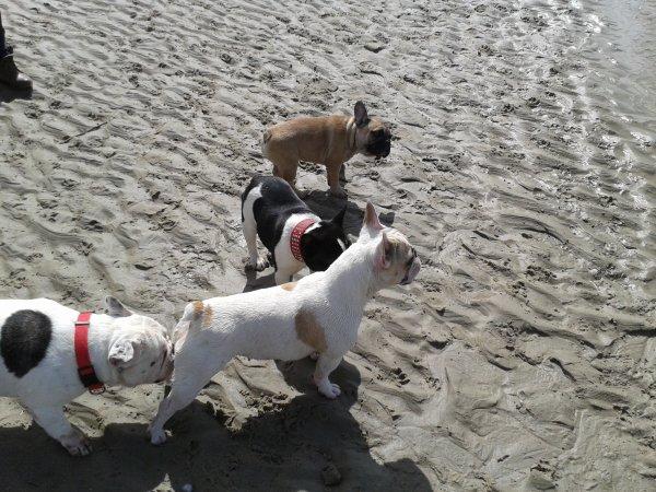 bouledo a la playa