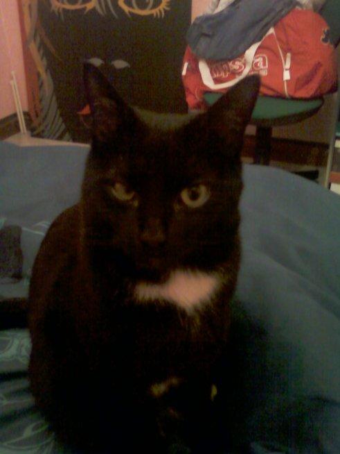 la chat a mon amour jtm