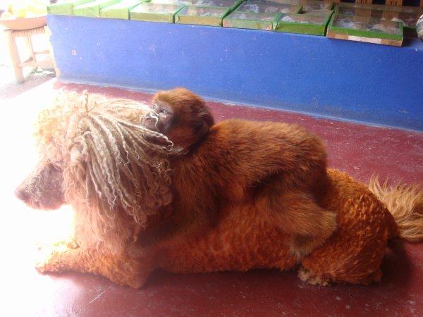 from maroco 2010