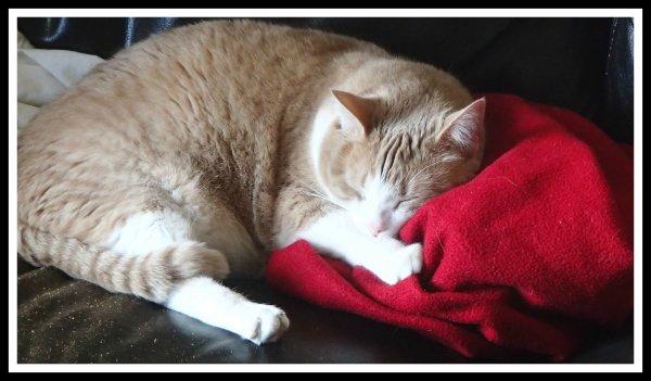 La belle vie de notre Figaro aujourd'hui !