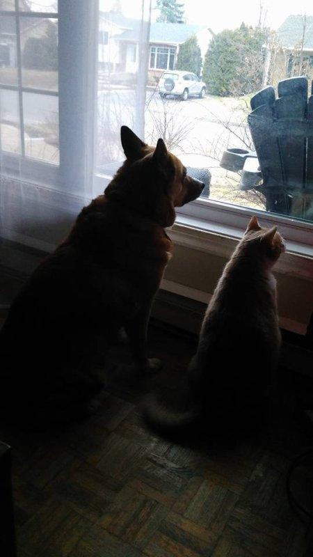 Foxy et Figaro