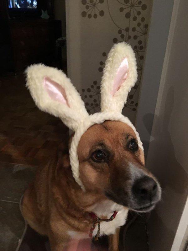 Foxy et Figaro fête pâques !