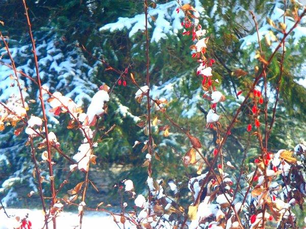 première neige au sol Québec Canada