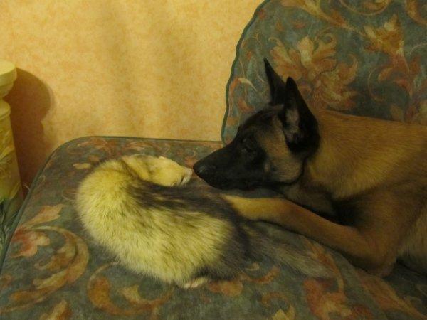 le furet a ma fille et mon chien dark mon amour de chien