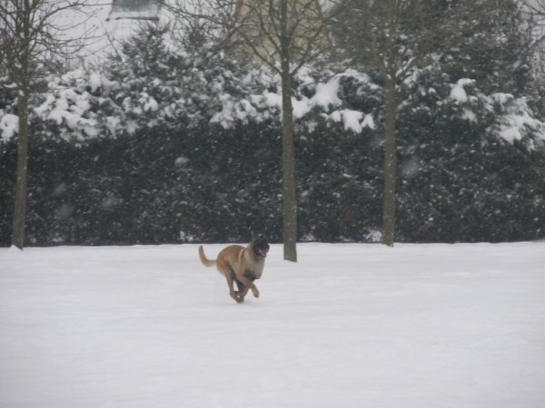 gibbs et dark ma beauté en action lol ( le 20 janvier 2013)