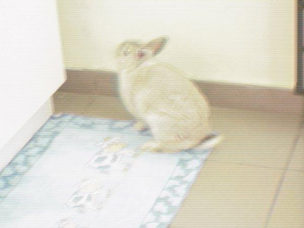 le lapin a log