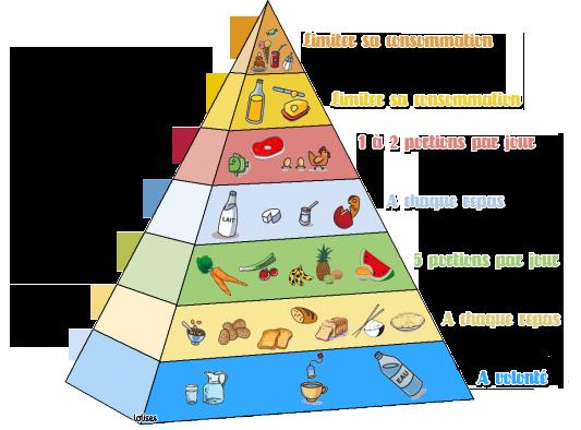 Pyramide des Aliments et Mannequin virtuel