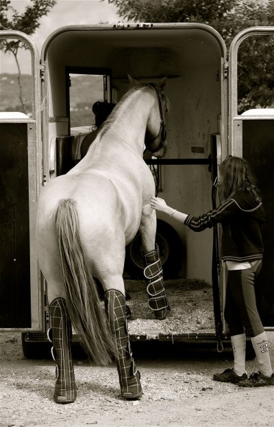 """""""Pensez comme un cheval mais ne le dotez pas de qualités, d'émotions ou de sentiments humains parce que, par bonheur pour lui, ce n'est pas un être humain."""""""