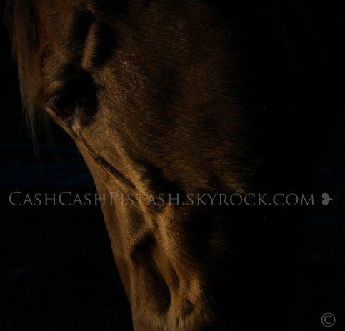"""""""Le vent voulait un corps, il a eut le cheval..."""""""