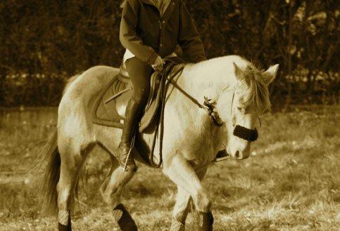 On a vu des chevaux et des cavaliers parfaitement d'accord : c'étaient assez souvent des chevaux de bois.  Robert Dieudonné