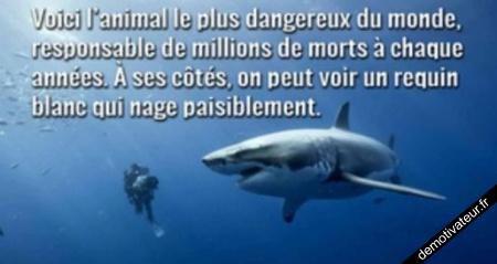 requin un gentil poisson