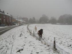 Chevaux dans la neige. Suite.