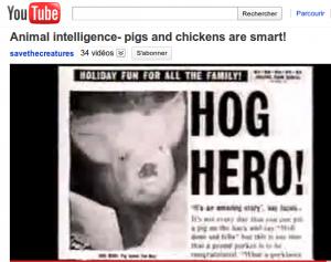 Cochons héros.