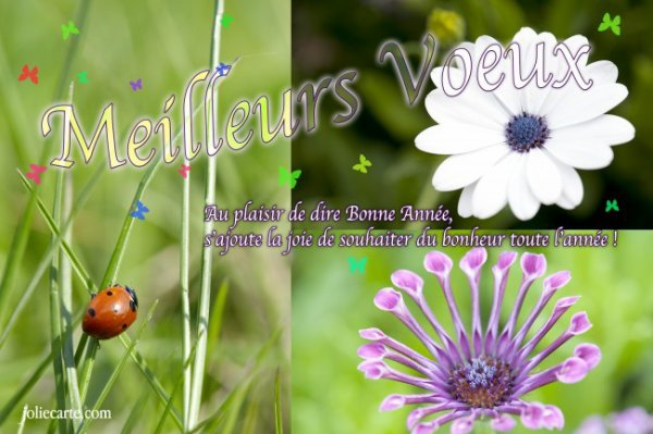 MEILLEURS VOEUX DE BONHEUR A TOUTES ET TOUS