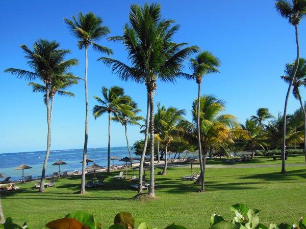BON DIMANCHE - CI-DESSOUS  deux photographies de la Martinique dont l'une de l'ile de Ste Lucie