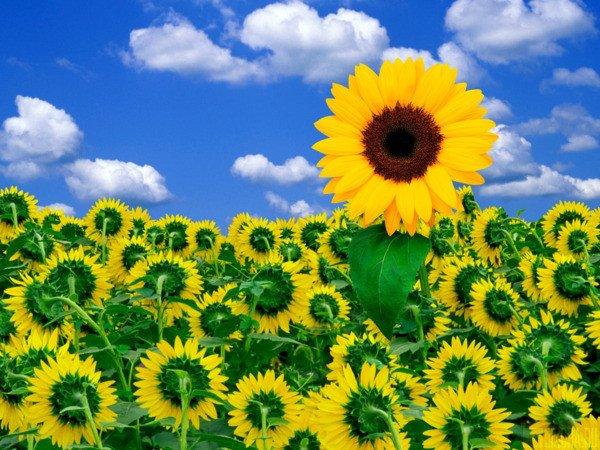 Je vous offre ces quelques fleurs pour illuminer vos journées